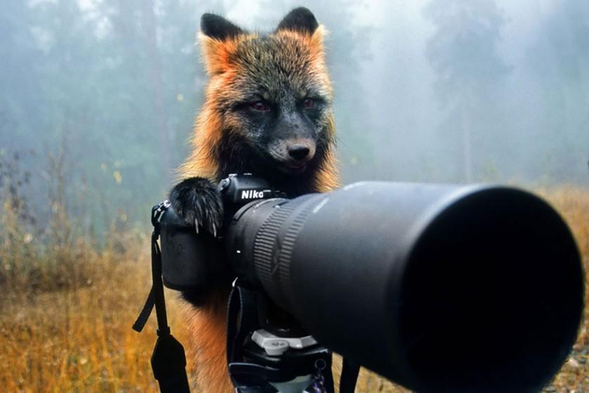 Amikor a róka a fotós - Rókavilág.hu