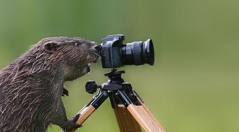 Amikor az állatok van a kamera túloldalán - Rókavilág.hu