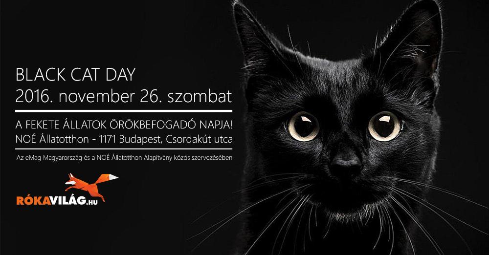 A fekete állatok örökbefogadó napja! - Rókavilág.hu