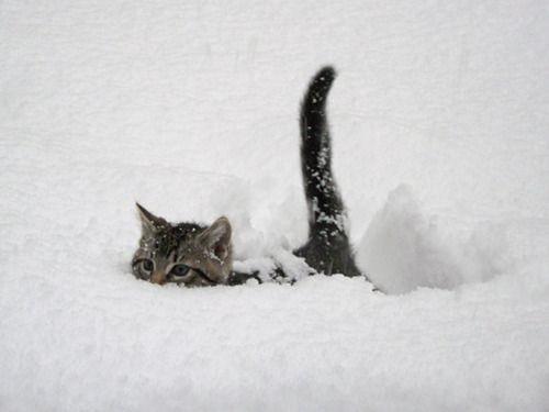Ahogyan az állatok imádják a havat - Rókavilág.hu