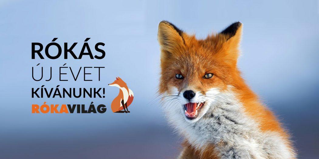 Boldog új évet kívánunk! - Rókavilág.hu