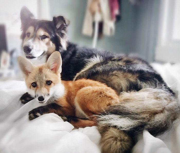 A rókák és a nagyölelés! – Rókavilág.hu
