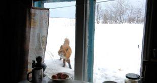 Egy szépséges, tematikus fotósorozat. Állatok és az ablak címmel! – Rókavilág.hu