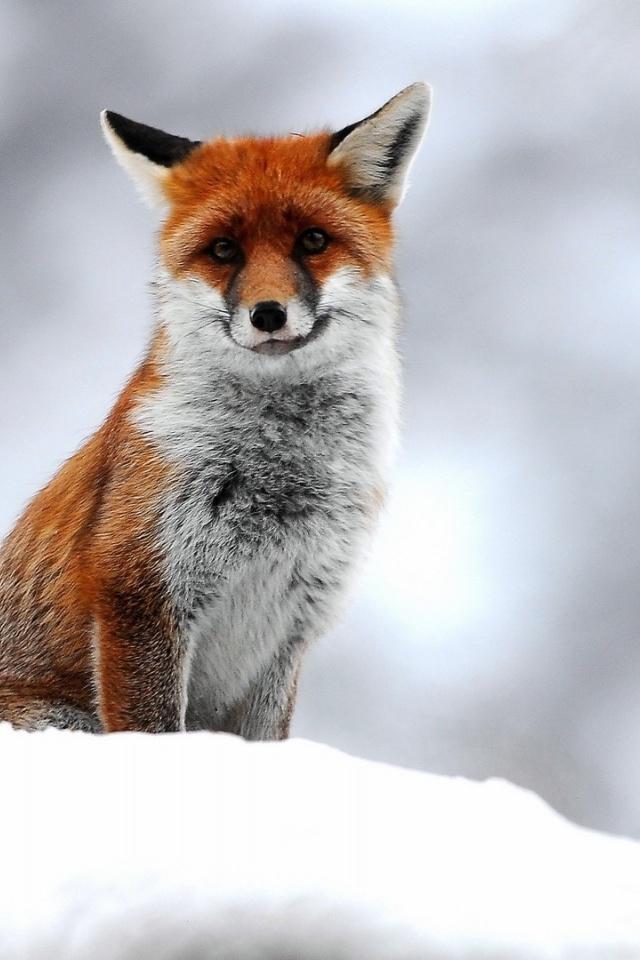 A tél első napja - Rókavilág.hu