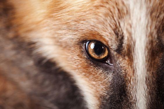 Az állatok is tudnak menő szelfiket csinálni! - Rókavilág.hu