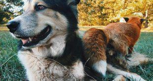Juniper róka és az ő legjobb barátja - Rókavilág.hu