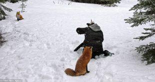 A kíváncsi róka, aki fotós babérokra tört – Rókavilág.hu