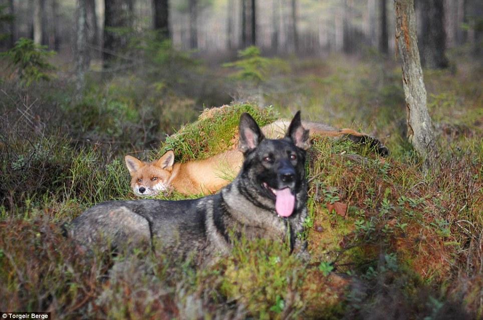 Sniffer és Tinni különös barátsága –Rókavilág.hu