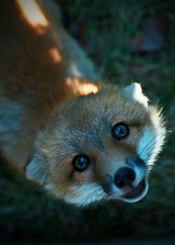 Boldog rókák fotósorozat - Rókavilág.hu