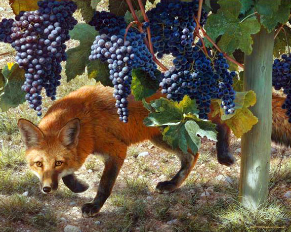 A róka ízű a bor! - Rókavilág.hu
