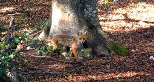 Nézzétek mennyi erdei lény egyetlen fa körül! - Rókavilág.hu