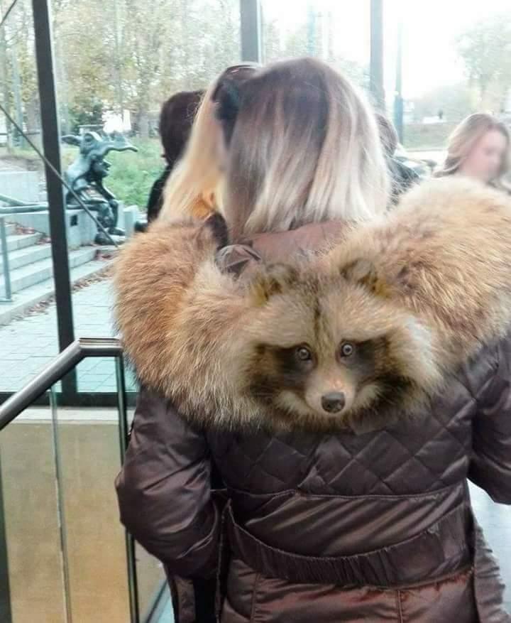 Ne hordjatok olyan szőrmét, amelynek arca volt! - Rókavilág.hu