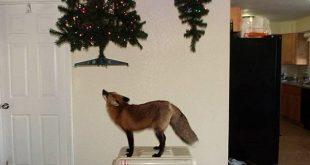 Rókabiztos karácsonyfa térkapuval otthonra - Rókavilág.hu