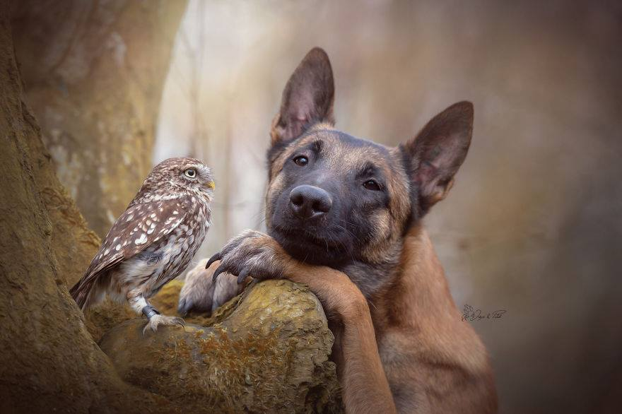 A kutya és a tollas barátai - Rókavilág.hu