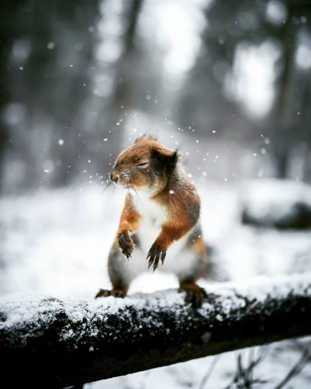 A finn erdők varázslatos lényei - Rókavilág.hu