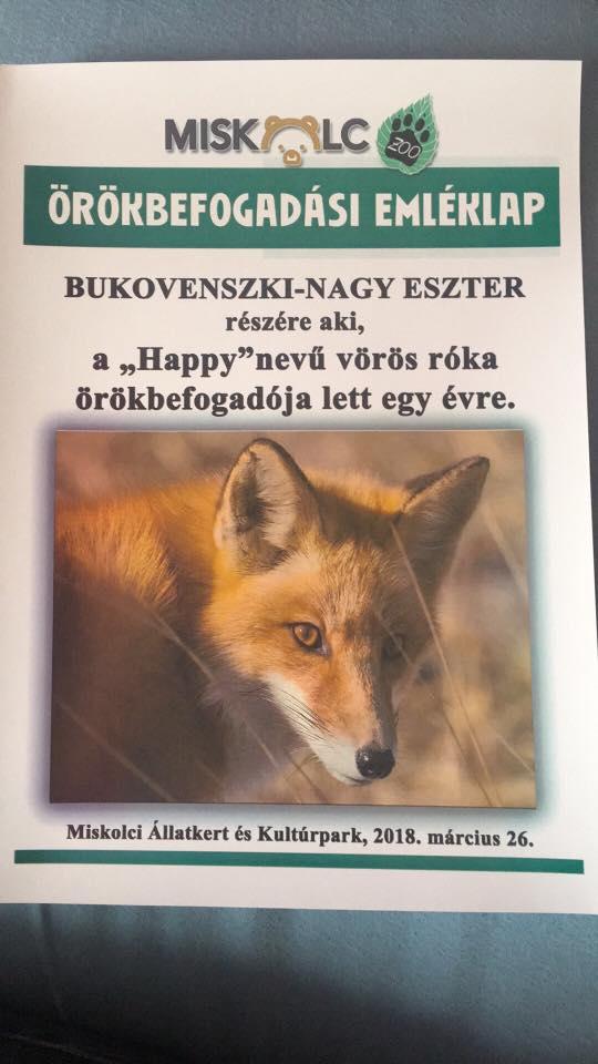 Happy és Szeszti - Az örökbefogadott miskolci rókafi - Rókavilág.hu