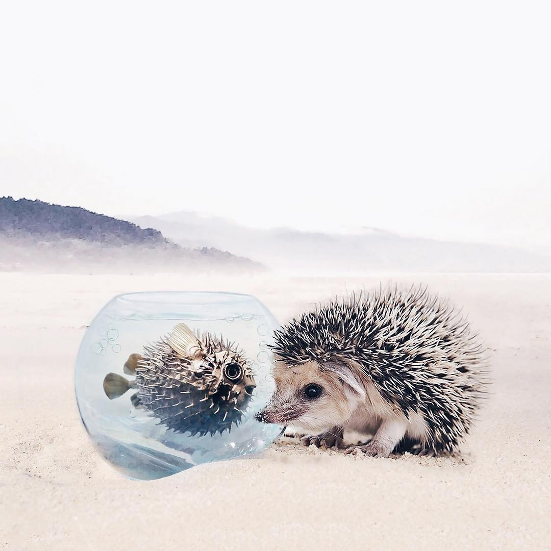 Mesebeli fotók állatokról - Rókavilág.hu